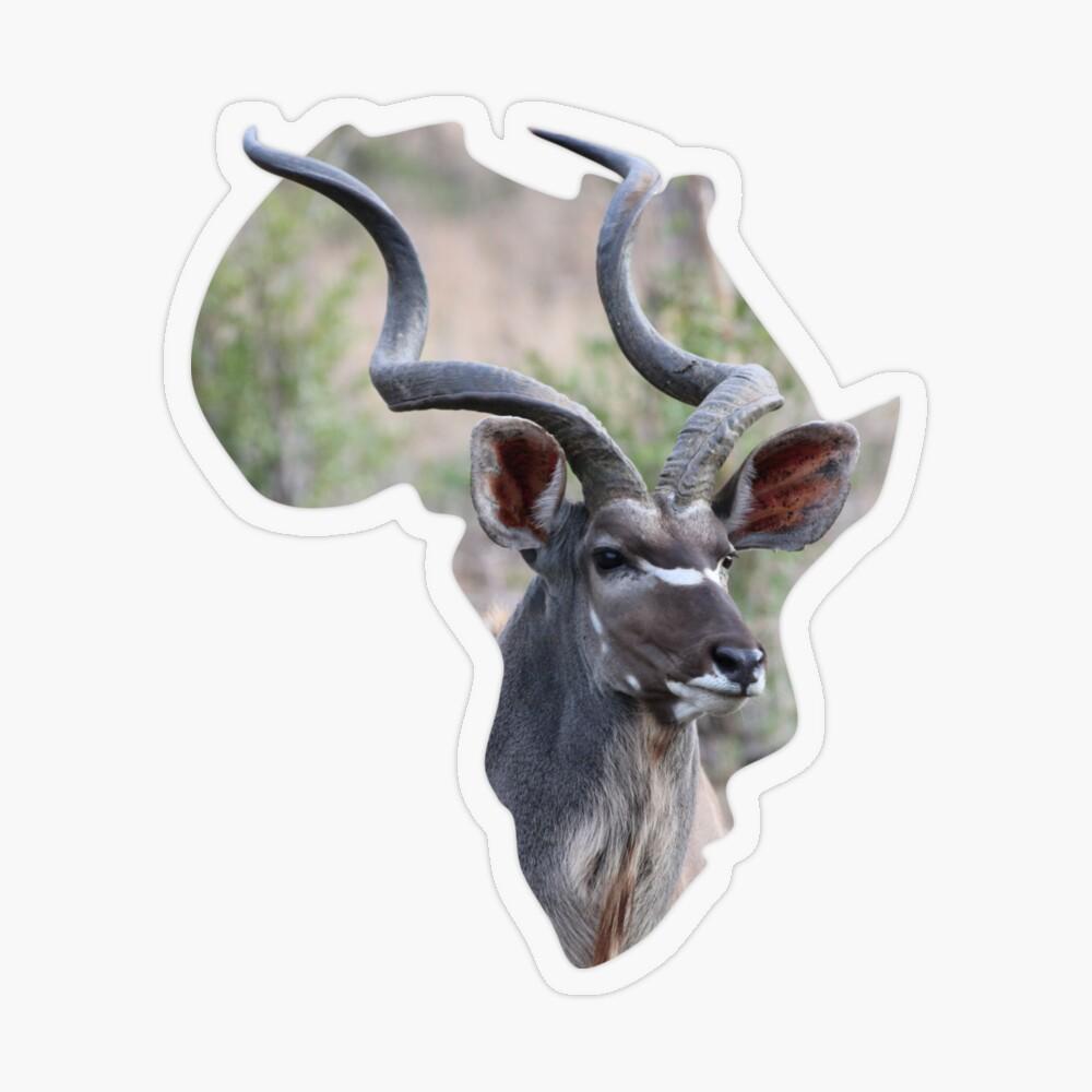 Africa & Kudu sticker