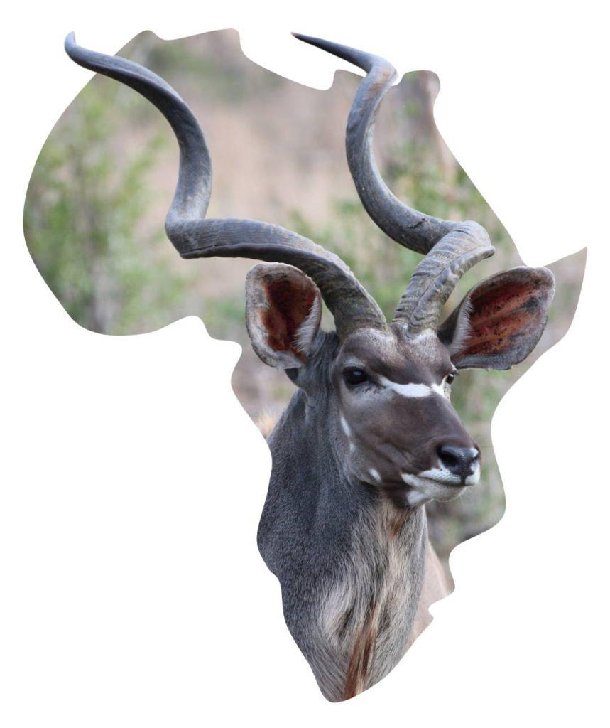 Africa with Kudu